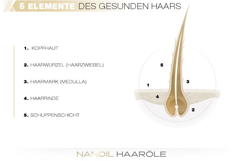 5 Elemente des gesunden Haars