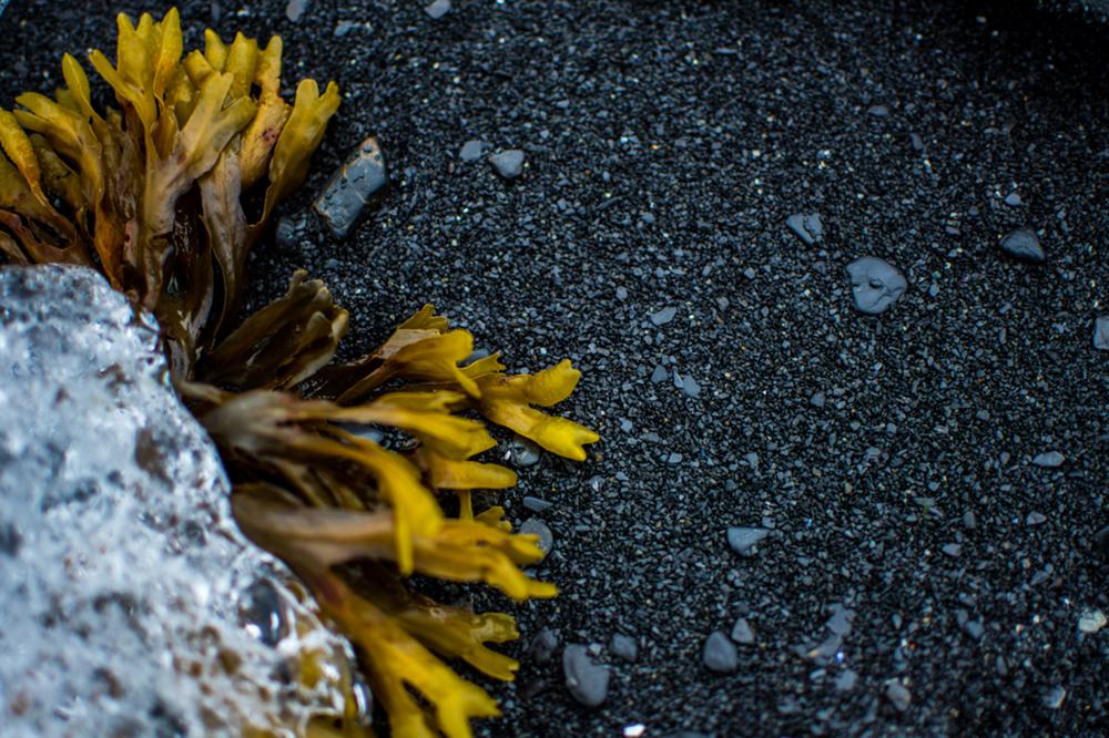 Haare der Welt. 7. Teil: Haarpflege in Antarktis und Arktis