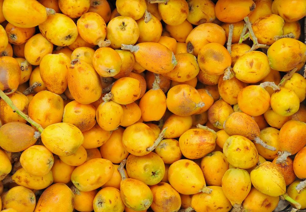 Marula-Öl für Haare – verjüngendes Gold-Elixier